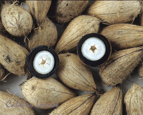 murumuru - Produtos naturais: você conhece o Murumuru?