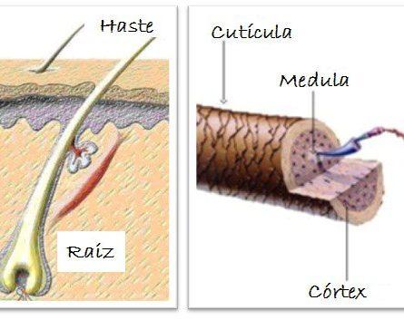 cortes capilar